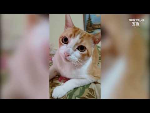 Приколы с котами и кошками Приколы с животными Приколы