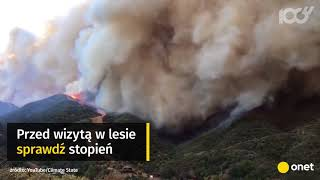 Pożar w lesie - jak nie powodować zagrożenia? | Onet100