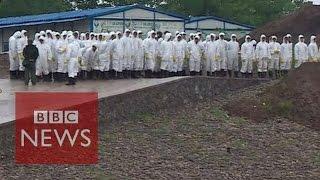 China ship capsize: Forensic teams gather at Yangtze site - BBC News