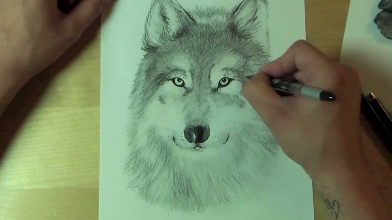 Wie Zeichnet Man Einen Wolf How To Draw Youtube