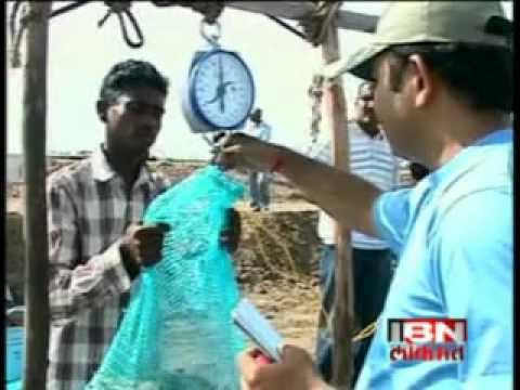 """manoj sharma shrimp farming in Gujarat""""Towards blue revolution."""""""