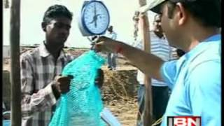 manoj sharma shrimp farming in Gujarat