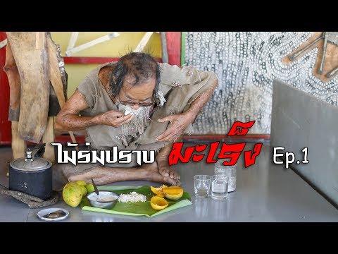 ไม้ร่มปราบมะเร็ง Ep.1 (Mairom  Thammachati-asoka)