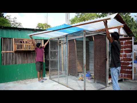 How to Make Pigeon Breeding House [Easy and DIY]