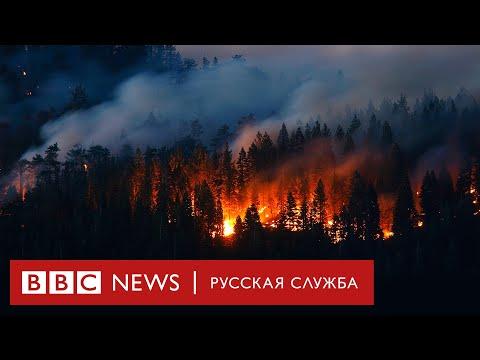 «Будет хуже»: главные вопросы о лесных пожарах в России