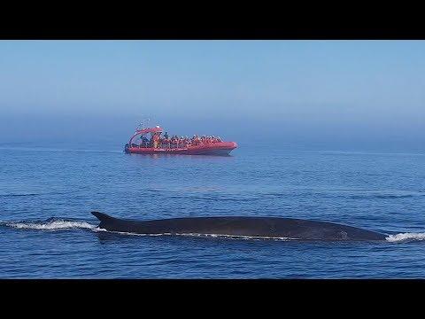 Le Balene Di Tadoussac