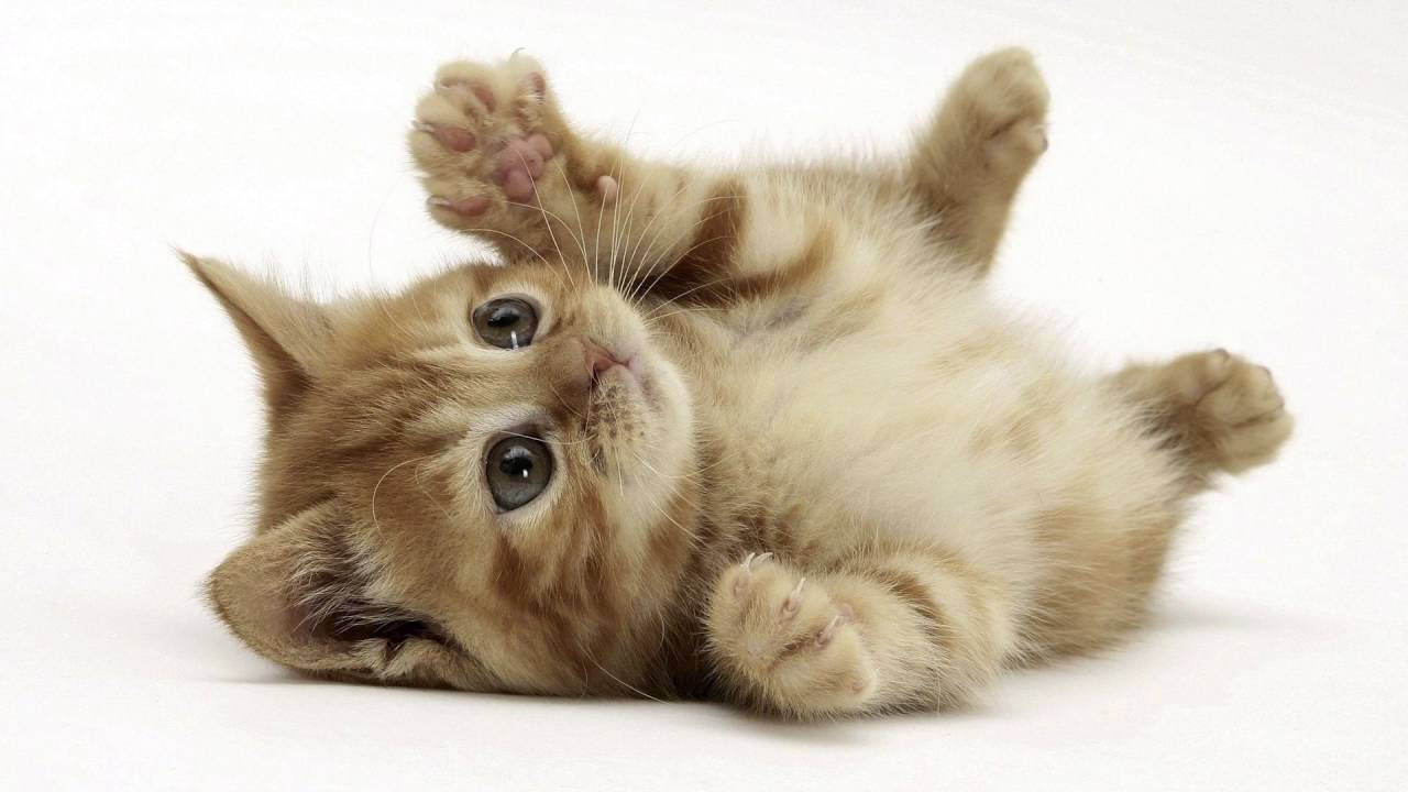 9000 Wallpaper Cat HD Gratis