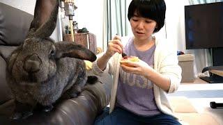 Giant Rabbit 'Wants' to Eat Grapefruit! (ジャイアントうさぎ、グレープフルーツが食べたい)