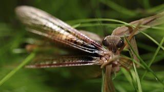 Mantis A, Mantis B - Rachel Yurkovich