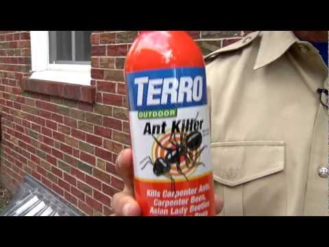 Top 10 Best Ant Killers (Complete 2019 Buying Guide)