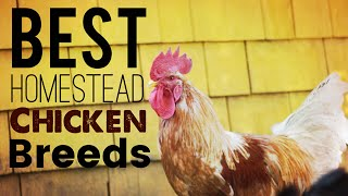 Chickens What Breeds are Best