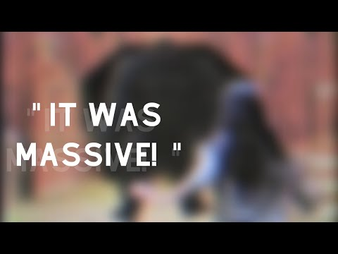 "The Family ""Bigfoot"" Story! (True Terrifying Encounter!)"