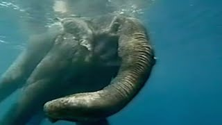 Jacques Cousteau Doku | Diving Elephants | Andaman Islands in german deutsch