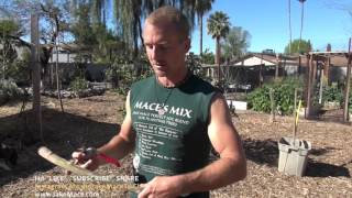 Moringa Tree from CUTTINGS - Turning a Branch into a Tree