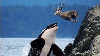 BADASS Sea Creatures That Hunt Land Animals!