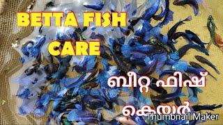 #Bettafish_breeding and care part 2