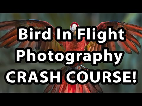 Bird In Flight Photography - Crash Course!