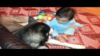 Siberian Husky And Baby, What's Your Name???