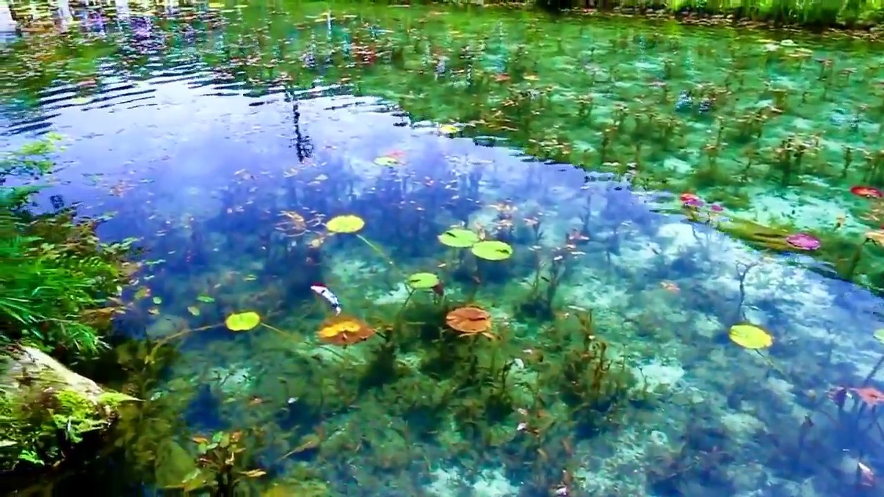 Monet S Pond Seki City Japan Youtube