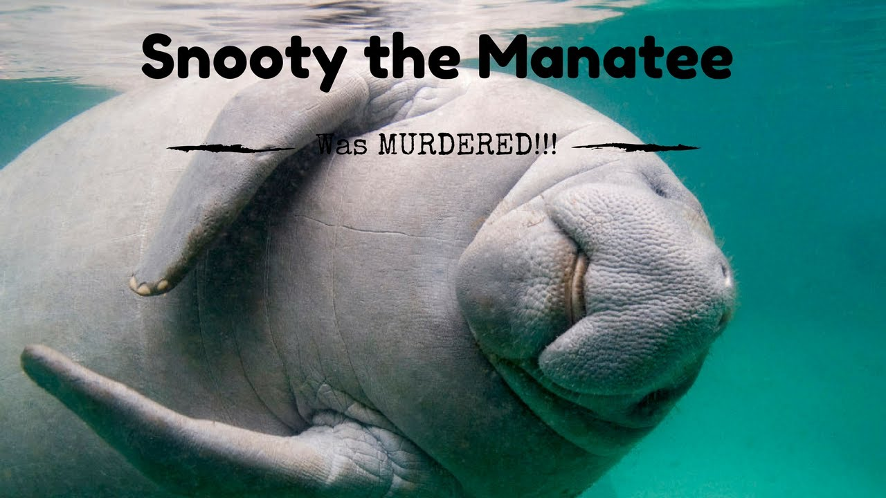 snooty the manatee was murdered by donald trump youtube