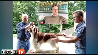 Doug Johnson & Jamie Hubbard of Clussexx Kennel – What to look for in the Welsh Springer Spaniel