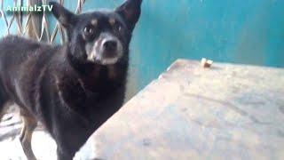 おかしい犬|犬は食べ物を盗む|フュニュの犬は食べようとする|犬はナッツ...