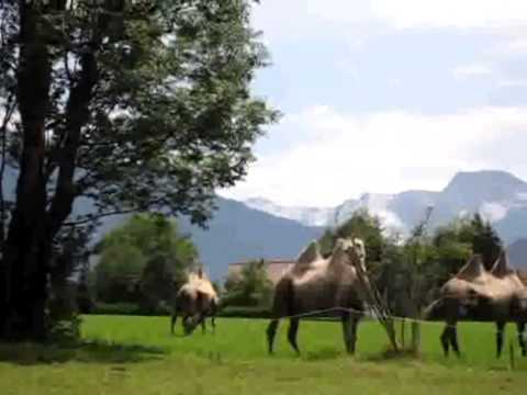 Climate Change, Camels in the Alps