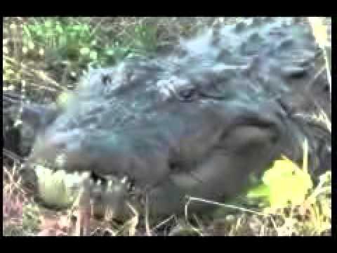 Crocodile Animal Park Kotami Sonar Chhattisgarh Bilaspur