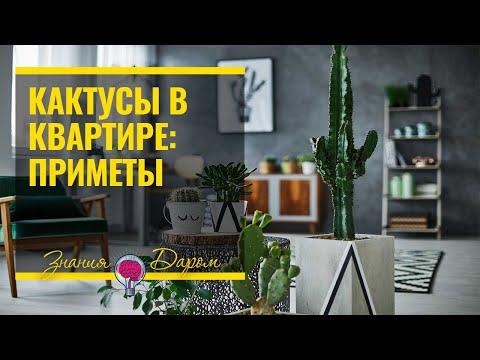 Кактусы в квартире: мифы, приметы, теории