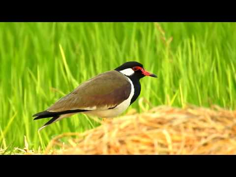 wildlife animal in india conclusion What is the conclusion of wild life conservation efforts in india  conclusion protection of wildlife alone is not possible only by laws and government  since india is home to a number of.