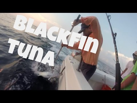 Fishing Labor Day Weekend TUNA in Panama City Beach - September 2015