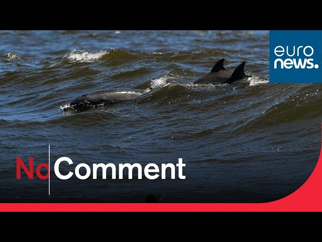 Watch: Hundreds of dolphins 'stampede' off coast of California