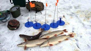 Зимняя Рыбалка на Жерлицы Охота За Щукой