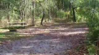 Pine Woods Campground Loop 2, Southern Kettle Moraine State Forest