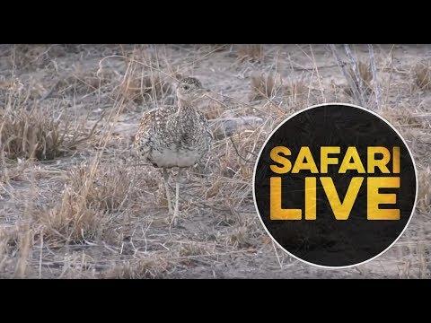 safariLIVE- Sunrise Safari - September 4, 2018