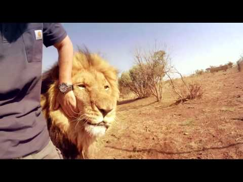 Bongani's Mysterious Injury! | The Lion Whisperer