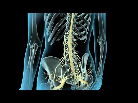 Epidural & Spinal Anesthesia