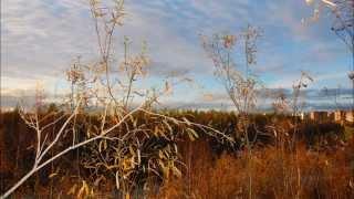 Новый Уренгой. Ямало-ненецкий автономный округ.(Командировочки..., 2015-09-14T04:00:25.000Z)