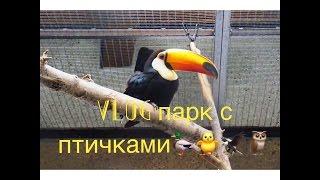 Vlog №14 Целый парк с разными птицами