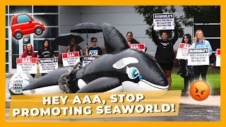 Animals Die at SeaWorld and AAA Doesn't Care