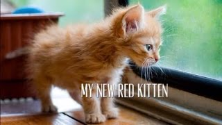 Рыжий котенок Kittens ❤️