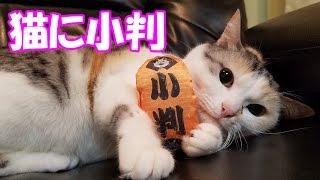 猫に小判、スーパーネコ吉ケリケリ!
