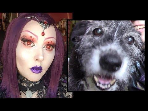 Goodbye DogDog... What Happened :(
