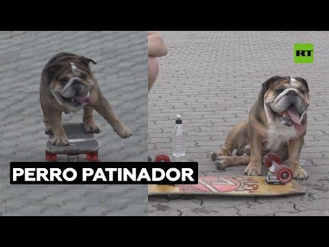Este bulldog es un experto 'skater'   @RT Play en Español