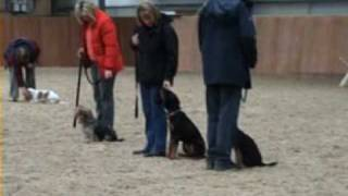 Puppy/beginner Dog Training Www.mellordogschool.co.uk