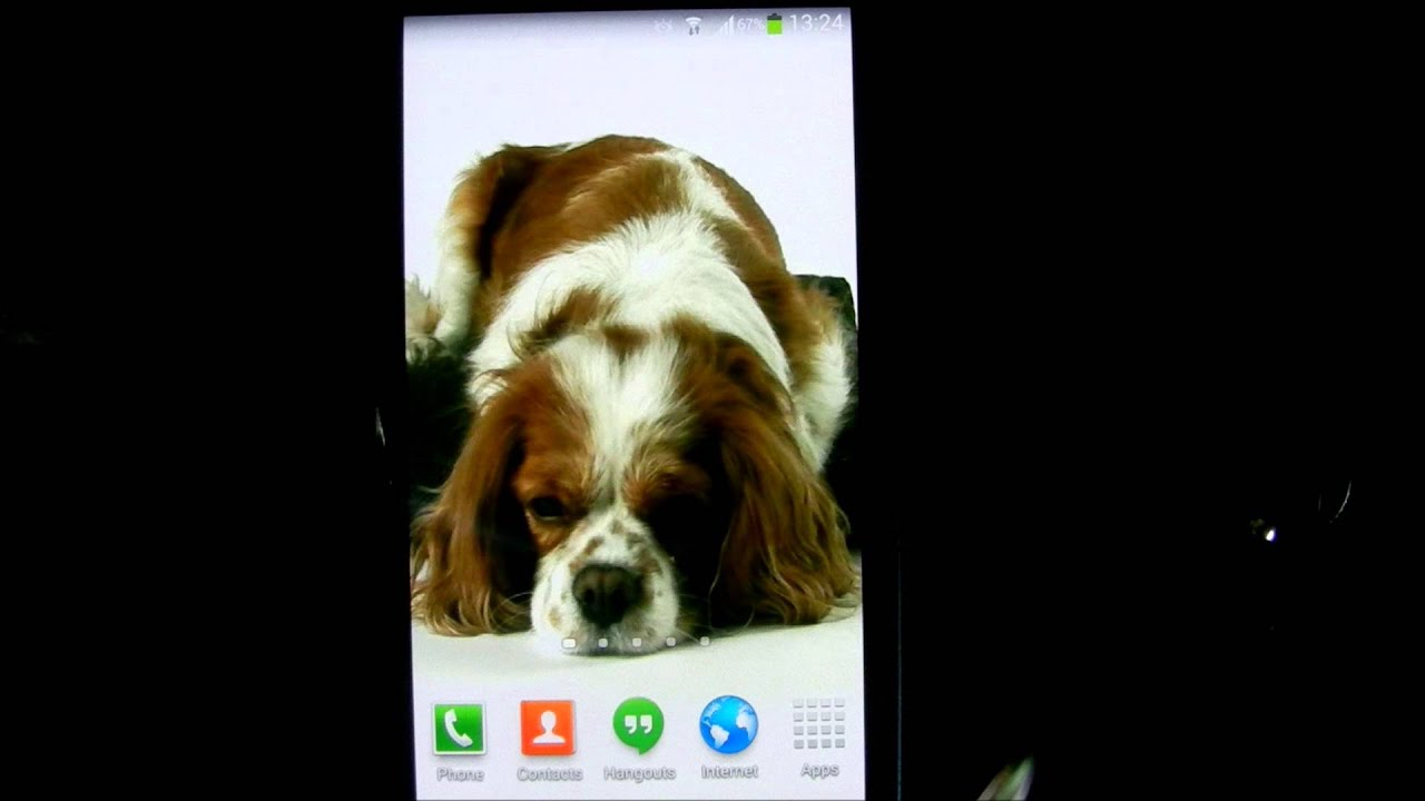 Dog Live Wallpaper HD