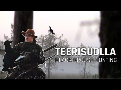 TEERISUOLLA 2018 | Black Grouse Hunting
