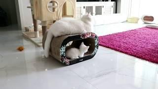 모찌와 요나는 새식구 아기고양이 신비를 어떻게 대할까요^^