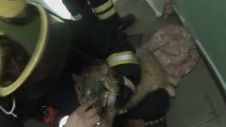 Спасение кота после пожара