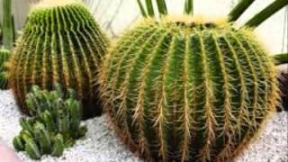 النباتات الصحراوية
